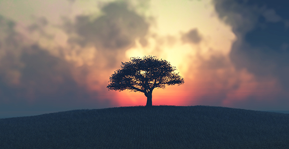 Lone standing tree at sunset