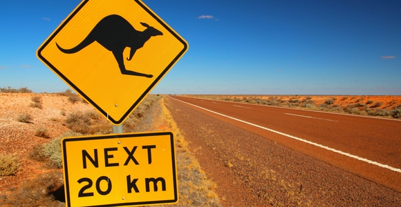 Kangaroo Caution Road Sign