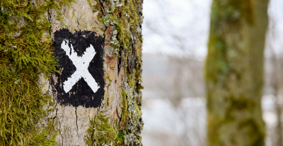 Pictures of an x on a tree among a forest of trees