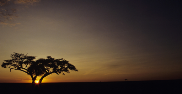 tree at sunset, growth for growth's sake