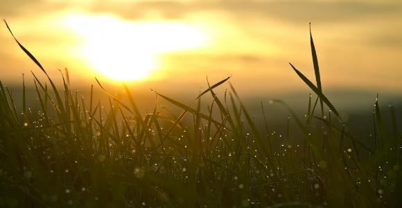 sunrise through grass